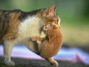 animales-adorables-gato-cachorro-madre